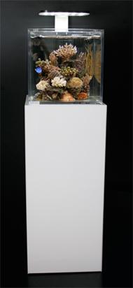 house reef - acquaportal forum acquario dolce e acquario marino - Mobili Per Acquario Marino