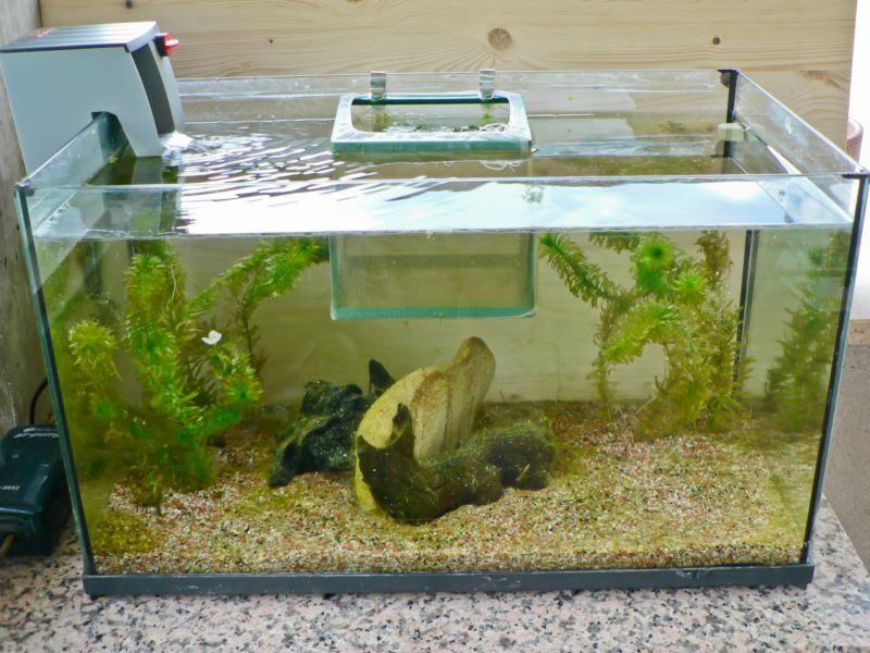 Aphanius mento zengen acquaportal forum acquario dolce for Vasca pvc laghetto